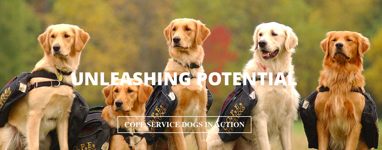 Hayden chose COPE Service Dogs | ECHOage - Get great gifts